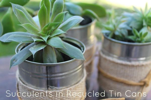 Succulents-title