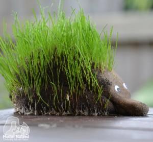 Echidna-Hedgehog-Grass-Head